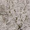 Snowy Tree (1)