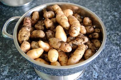 Dirty Balcony Grown Anya Salad Potatoes